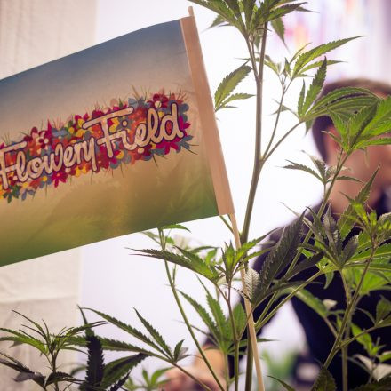 Cultiva International HEMP EXPO @ Pyramide Vösendorf